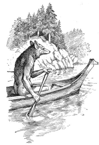 Kojot trickster